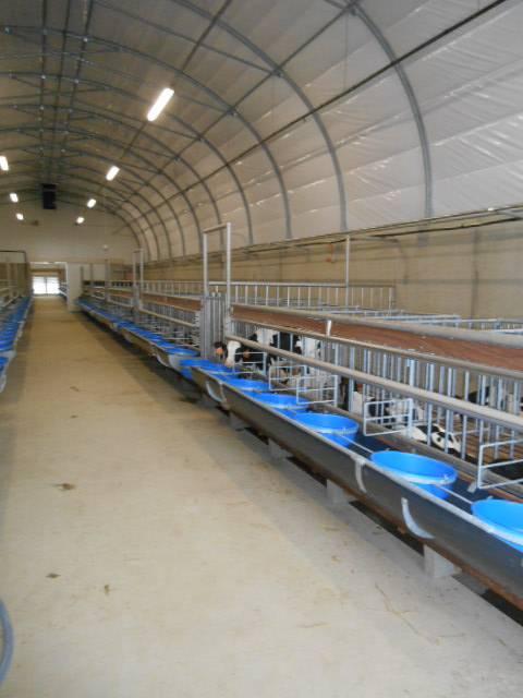 Salle de veaux 1- distribution de lait